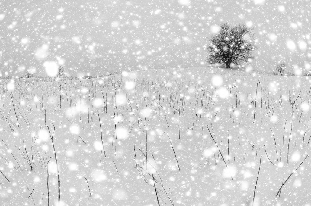NE HASZNÁLD! - canon év természetfotósa, 2015 természetfotó, XII. Fekete-fehér természetfotók, 2. díj - Hózápor -