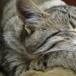 Három évig számolják majd, hány macska él Washingtonban