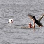 A fagyos Dunában úszott Schirilla