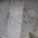 Rágcsálóürülékkel teli tofugyárat záratott be a Nébih – videó