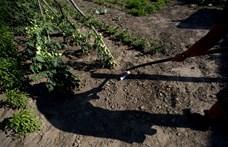 Elterjedt hatóanyagokat tiltott be az EB, gondban lesznek a gazdák