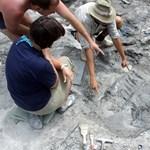 Eddig ismeretlen hártyásszárnyú dinoszauruszt azonosítottak