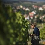 Tokaj-Hegyalját felminősítették