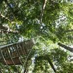 Ombudsman: Nem védi eléggé a természetet, meg kell semmisíteni az erdőtörvényt
