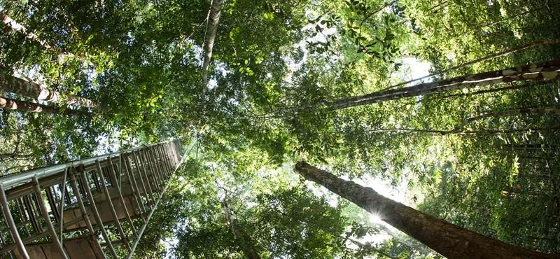 Zseniális törvény a Fülöp-szigeteken: minden diáknak 10 fát kell elültetnie az érettségiért