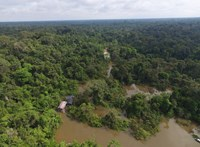 Egy hónap után találtak meg az amazonasi őserdőben egy nőt három gyerekével