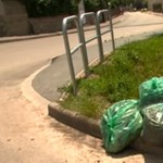 A központosítás mellékhatásaként hetek óta rohad az utcán a budaörsi zöldhulladék