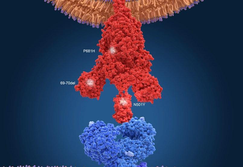 Magyarországon is megjelent a koronavírus brit mutációja