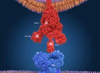 Egy nap alatt négyen meghaltak egy belga idősotthonban, miután megjelent a koronavírus brit mutációja