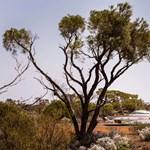 Szomjan halt egy család Ausztráliában