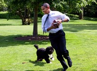 Barack Obama az egyik leghíresebb fehér házi fotóval búcsúzik a család kutyájától