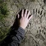 Fotók: Medve járt Nógrádban