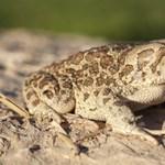 Csigák, halak, békák: Ezek az invazív állatfajok a legveszélyesebbek Európában