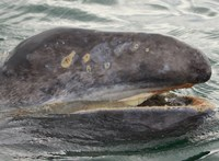 Félrement: Dániai bálnamészárlással támadta be a brazil elnök a norvégokat
