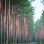 Van, ahova nem lenne szabad fákat ültetni