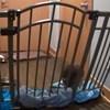 Ez a kiskutya mindent megtett, hogy kiszabaduljon az elkerített területről (videó)
