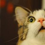 Háromezer forintért árulta a lenyúzott macskabőrt egy nő a neten