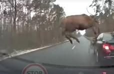 Vonulás közben ráesett egy szarvas egy BMW-re Lengyelorszában