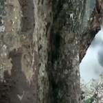 """""""Dohányzó"""" elefántot videóztak le Indiában"""