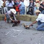 Tiltott kakaskodás, véres állatkínzás (brutális videók)