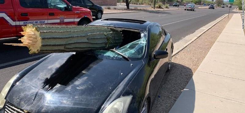 Részeg autós talált telibe egy hatalmas kaktuszt