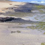 """Kitalálták a kutatók, hogyan lehet """"kezelni"""" az algákat, és ezzel duplán jól járhatunk"""