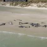 Tömegével vetődnek partra és pusztulnak el a delfinek Új-Zélandnál, a tudósok sem tudják, miért