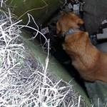Három méter mély aknából került elő egy két napja eltűnt kutya Oroszlányban