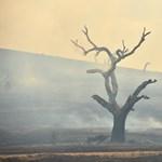 Hárommilliárd állat érintett az ausztrál erdőtüzekben