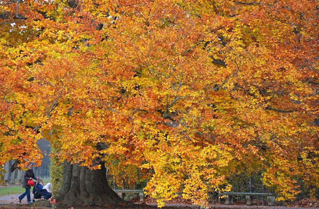 AP. Drezda, Németország: őszi séta a Pillnitz kastély kertjében - hét képei nagyítás