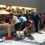 Besétált egy kecske egy Apple boltba
