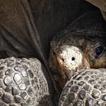 Repülőtér épült a teknős költőhelyére, az aszfaltra rakott tojásokat