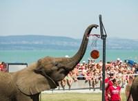 Agrármininsztérium: Szállítással összefüggésbe hozható baleset okozhatta a magyar cirkuszi elefántok halálát