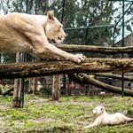 Kategóriájában ismét Európa legjobb állatkertje lett a Nyíregyházi Állatpark