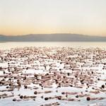 A nap képe: Amikor 1000 meztelen test lebeg a víz felszínén