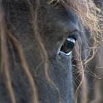A lovak értékelik, ha gügyögnek nekik