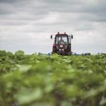 Utalási határidő a gazdáknak - de csak ha kárenyhítést akarnak