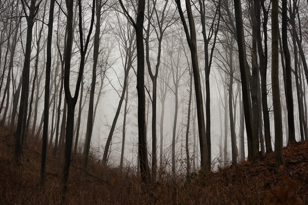 Farkaslyuk erdő
