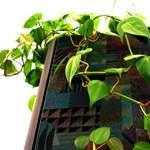 Szobanövények, amelyeket szinte lehetetlen túlöntözni