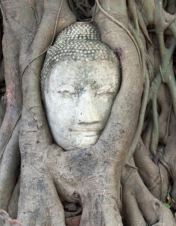 Fák világnapja - THAILAND, AYUTTHAYA : TO GO WITH AFP STORY Thailand-weather-floods-heritage,FOCUS by Kelly Macnamara