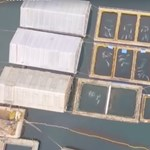 """Felszámolják az orosz """"bálnabörtönt"""", elszállásolják a 98 életben maradt állatot"""