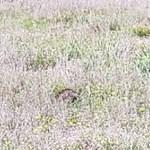 Nyíllal átlőtt szarvasok sétálnak Oregonban, keresik a tettest