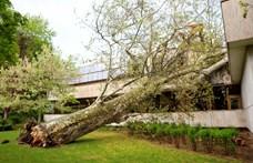 Villamosra is döntött fát a viharos szél Budapesten