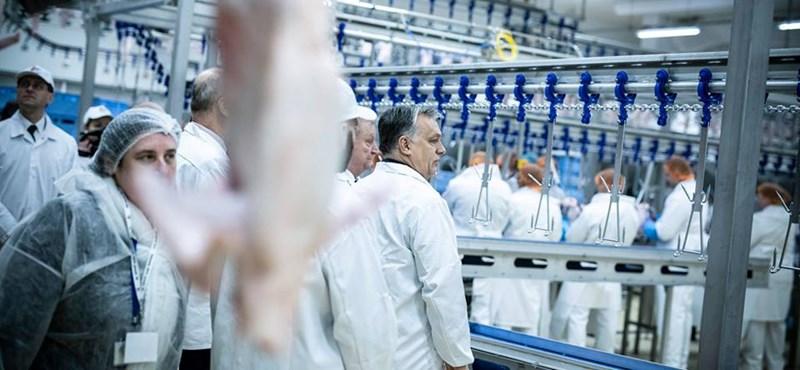 Orbán végképp búcsút mondhat a vegán szavazók voksainak