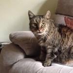 A szíve vitte el a világ legöregebb macskáját