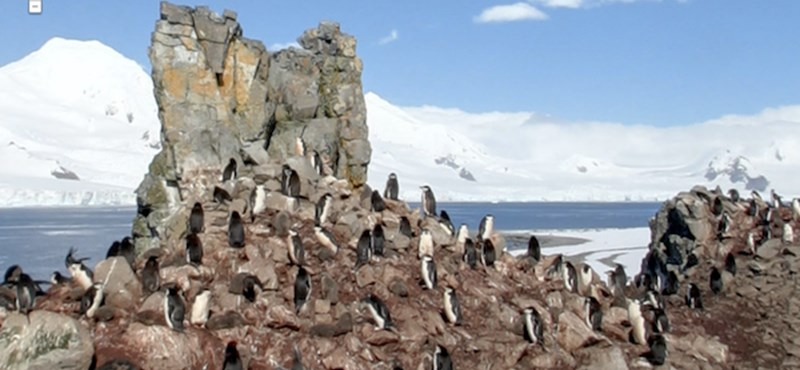 Pingvinek a Google Maps-en, avagy utcaképek a sarkvidékről