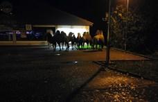 Néhány teve megszökött egy németországi cirkuszból, és elment a Lidlbe