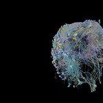 Videó: Fogták a muslica agyát, és ráeresztették a Google algoritmusát – az eredmény lenyűgöző lett