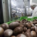 Csökkent a karácsonyi kereslet a diósgyőri Nestlé csokoládéfiguráira