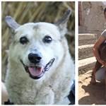 Az ELTE kutatói megfejthették, miért élhetnek 22-27 évig is kutyák – további ebeket keresnek
